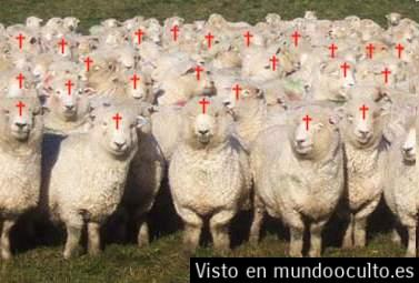 christian sheep[1]
